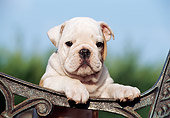 PUP 18 CB0003 01