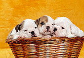 PUP 18 CB0009 01