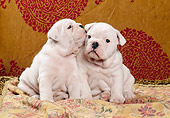 PUP 18 CB0010 01