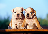 PUP 18 CB0012 01