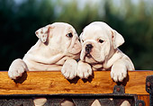 PUP 18 CB0013 01