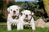 PUP 18 CB0015 01