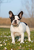 PUP 18 CB0024 01