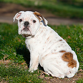 PUP 18 CB0038 01