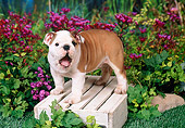 PUP 18 FA0016 01
