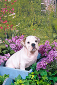 PUP 18 FA0019 01