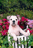 PUP 18 FA0020 01