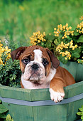 PUP 18 FA0025 01