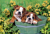 PUP 18 FA0026 01