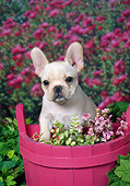 PUP 18 FA0028 01