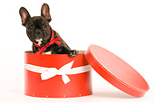 PUP 18 JE0001 01