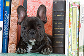 PUP 18 JE0004 01