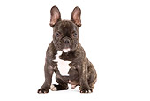 PUP 18 JE0006 01