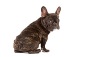 PUP 18 JE0011 01