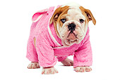 PUP 18 JE0014 01