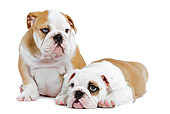 PUP 18 JE0024 01
