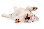 PUP 18 JE0027 01