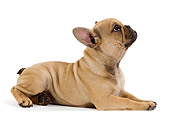 PUP 18 JE0028 01