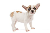 PUP 18 JE0033 01