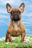 PUP 18 JE0035 01