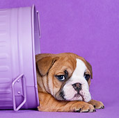 PUP 18 KH0017 01