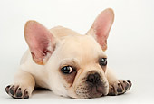 PUP 18 MR0008 01