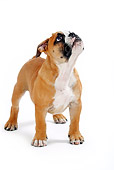 PUP 18 PE0001 01
