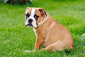 PUP 18 PE0003 01