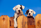 PUP 18 RK0001 06