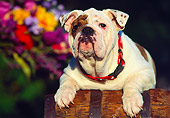 PUP 18 RK0047 21