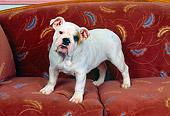 PUP 18 RK0054 02