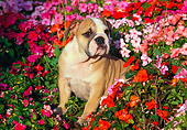 PUP 18 RK0102 01