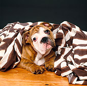PUP 18 RK0112 02