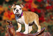 PUP 18 RK0192 01