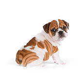PUP 18 RK0217 01