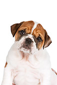 PUP 18 RK0219 01