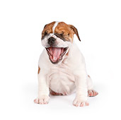 PUP 18 RK0221 01