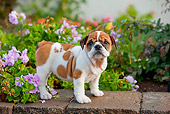 PUP 18 RK0223 01