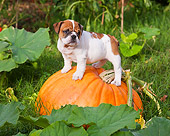 PUP 18 RK0224 01