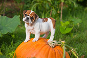 PUP 18 RK0226 01