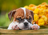 PUP 18 RK0227 01