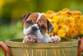 PUP 18 RK0229 01