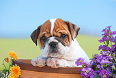 PUP 18 RK0230 01