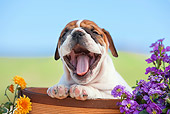 PUP 18 RK0232 01