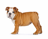 PUP 18 RK0233 01