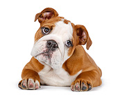 PUP 18 RK0236 01