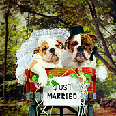 PUP 18 RS0050 01