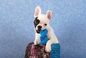 PUP 18 SJ0001 01