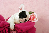PUP 18 SJ0003 01