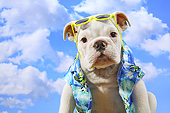 PUP 18 XA0001 01